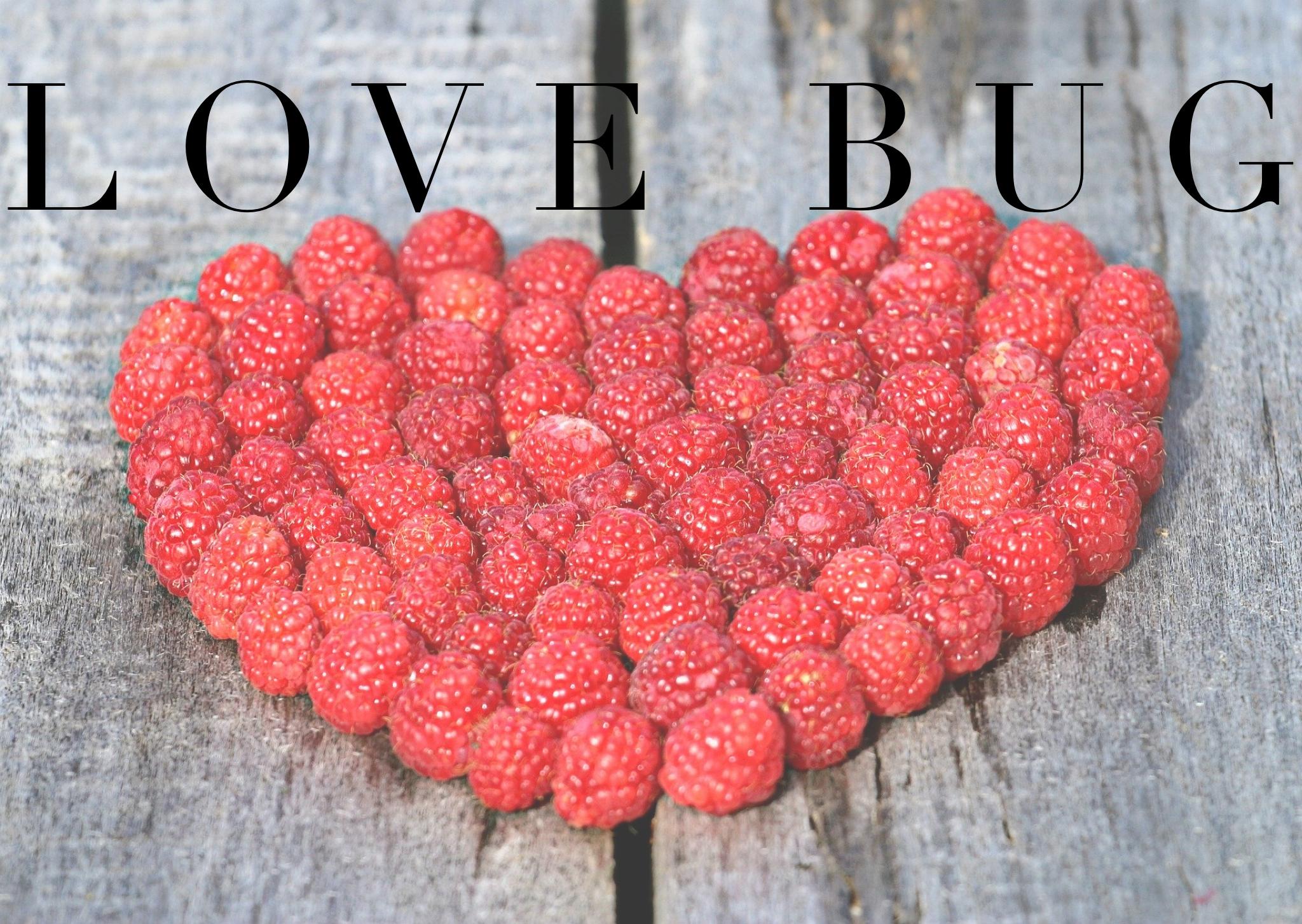 Love Bug Workshop 5+ Workshop